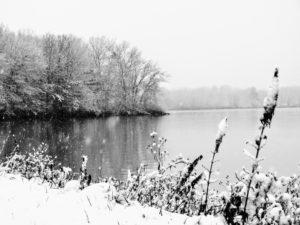 wayward-snowflake